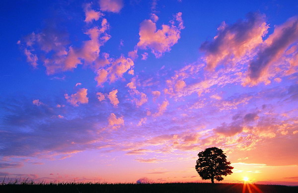 惹人心醉树之美!【绝色美图】 - tianwaifeixia2008 - 天外飞侠家园欢迎您