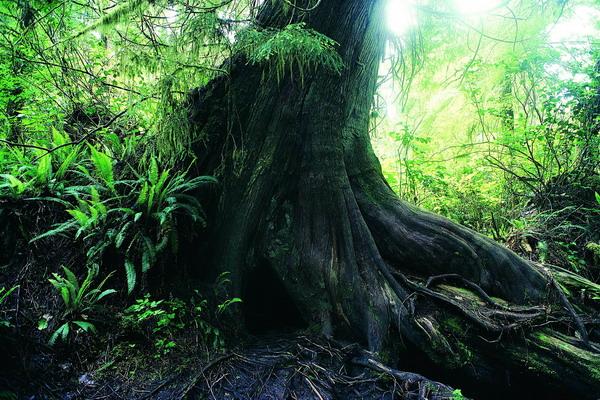 树之美!【绝色美图】 - 香儿