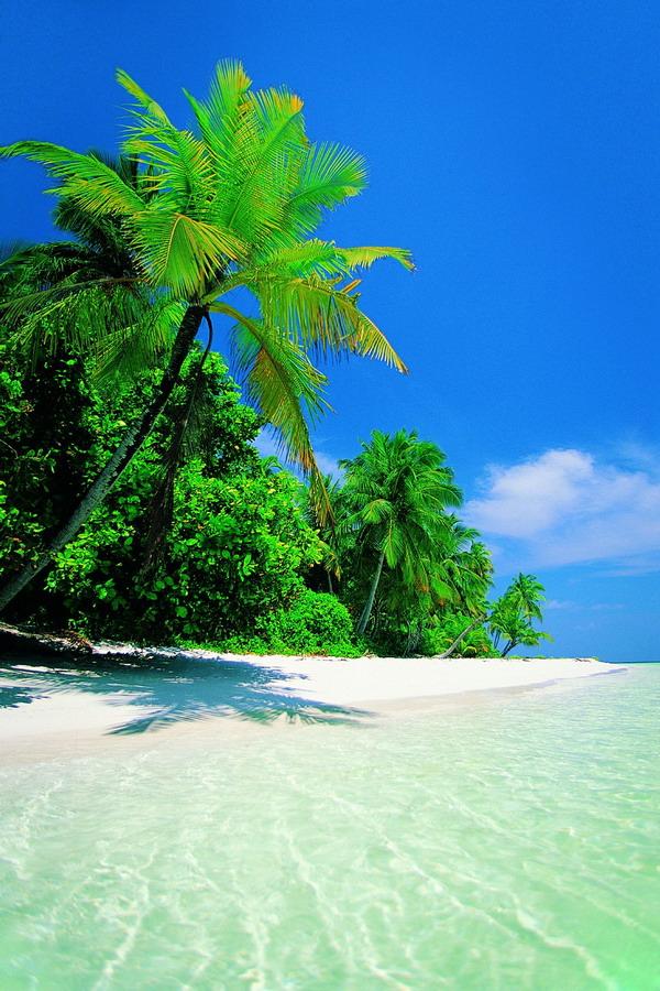 沙滩大海图片-自燃风景图 阳光 沙滩 大海