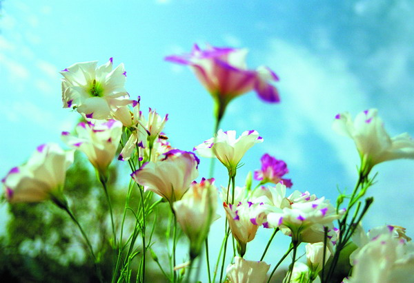 鲜花盛开 [300 P] - AAA级私秘视频馆 - jb.cb.cb.cb 的博客