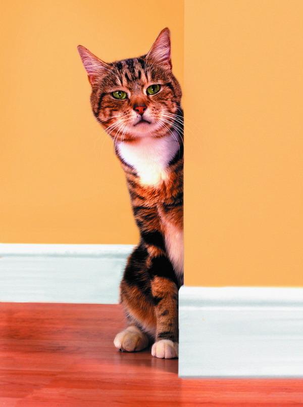 猫想,猫说 【原创】 - kkk20088 - kkk20088的博客