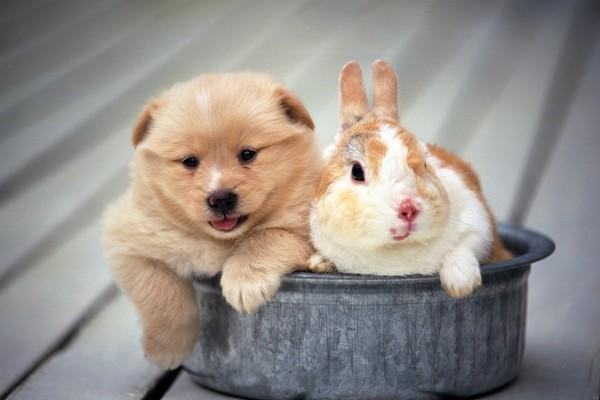 可爱狗狗图片-动物图 盘子 地面 和睦,动物,可爱狗狗