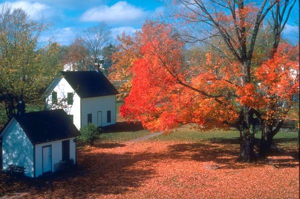 广告语_秋天景色图片-植物图 人家 树木 农村,植物,秋天景色
