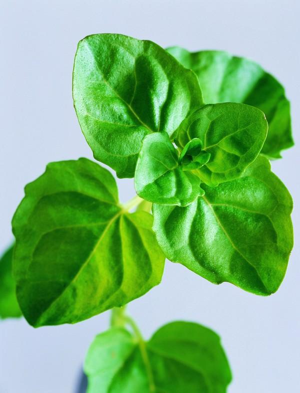 绿色健康饮食_秋季巧饮食工作时吃些绿色零食有利健康