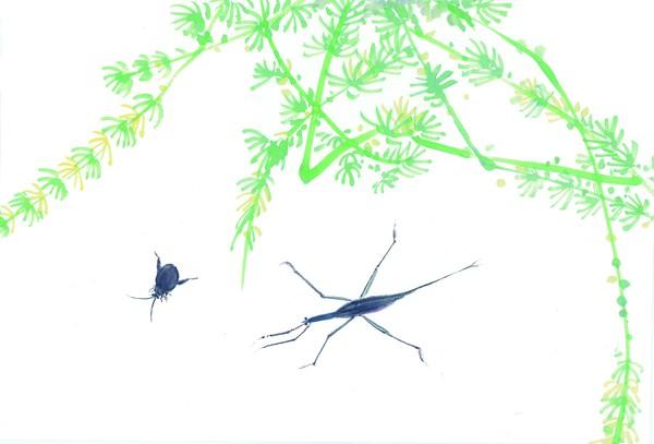 中國國畫-百態昆蟲[50P] - 曙红的日志 - 网易博客 - 萃文精选 - 萃文精选 博客文摘