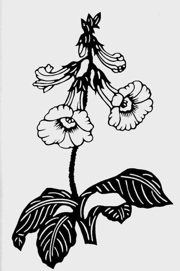 植物图案花纹图,中国民间艺术图片