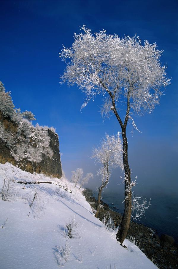 严冬 白雪 寒冷 丛林之美-自然风景,mm丛林大冒险,蜘蛛丛林,丛林男孩,丛林王-自然风景,丛林之美