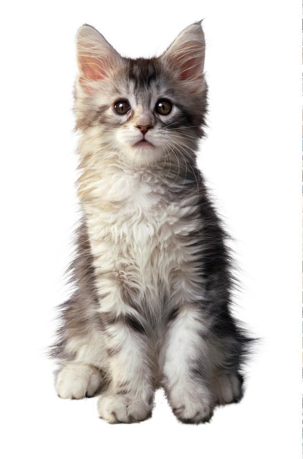 原创:猫之二 - 清音 - 清音