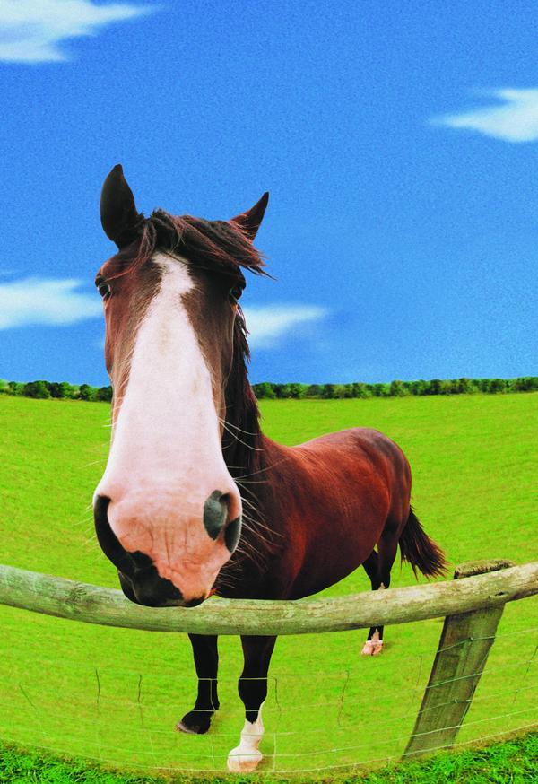 马图片 动物图 白鼻子 马驹 赤红,动物,马