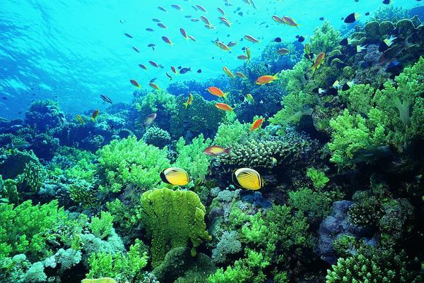 厦门 海底世界/海底世界图片/动物图 水草海底植物海洋动物...