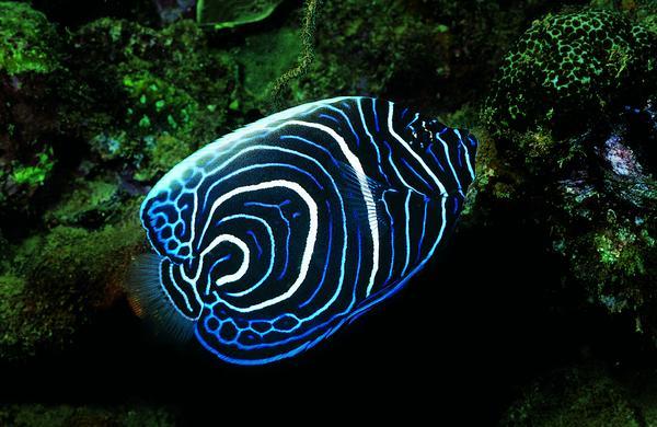 动物 摄影 鱼类/海底世界图片/动物图底下蕴藏 动物,动物,海底世界