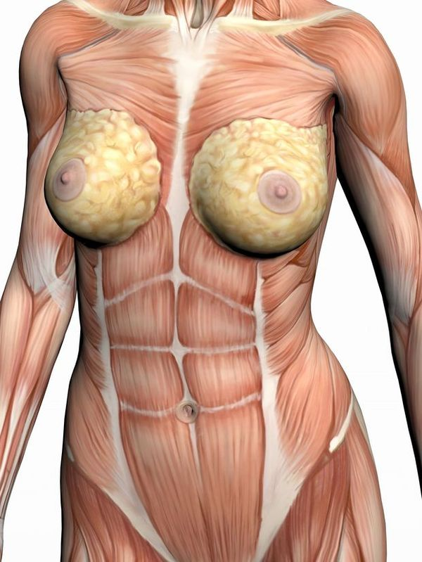 人体内脏器官分布图图片_有来医生