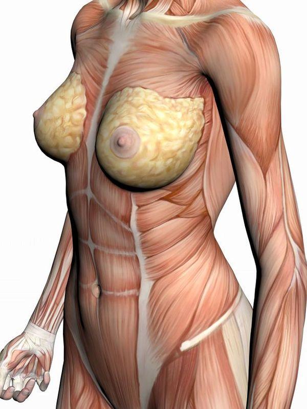 肌肉人体模型图片 综合图女人拨除皮肤 综合