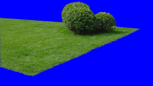 大副草皮图片 植物图,植物 高清图片