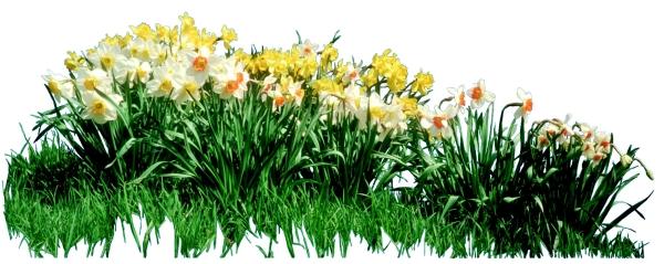 花草图片 植物图,植物