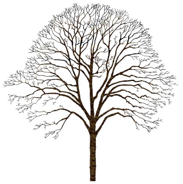 树木 植物,爱护花草树木的标语
