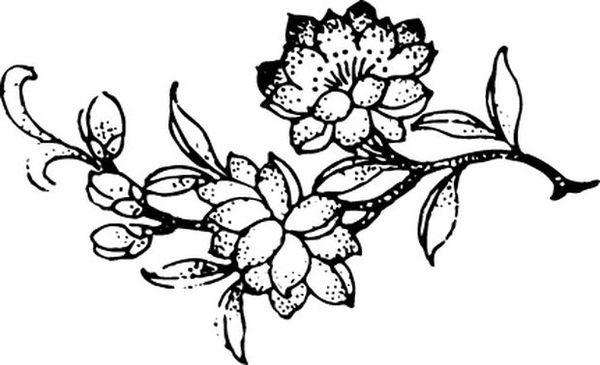 花枝 黑白画 花 竹子荷花植物-节日喜庆-节日喜庆,竹子荷花植物图片