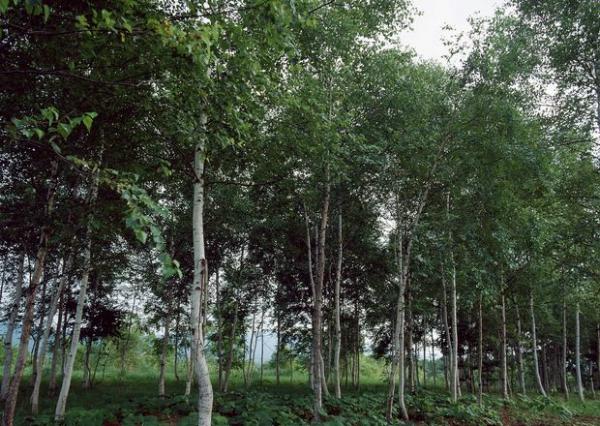 森林写照图片-自然风景图 木材 植 树 春天,自然
