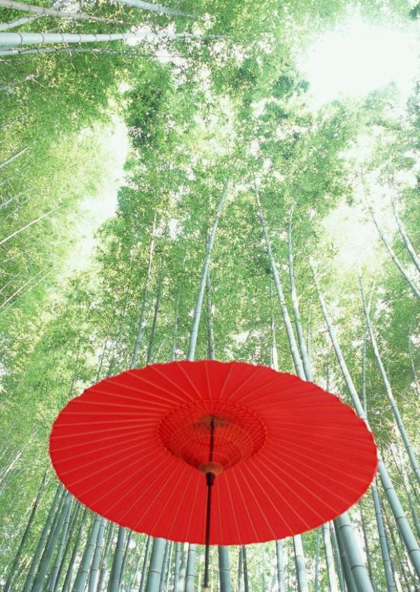红伞 竹子 竹叶