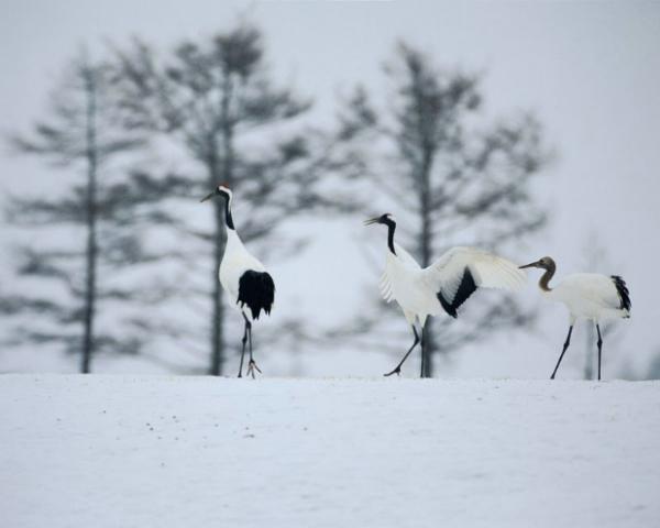 白色冬景图、自然风景图片,