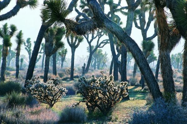 丛林之美-自然风景,蜘蛛丛林,丛林男孩,丛林王,丛林猎手-自然风景,丛林之美