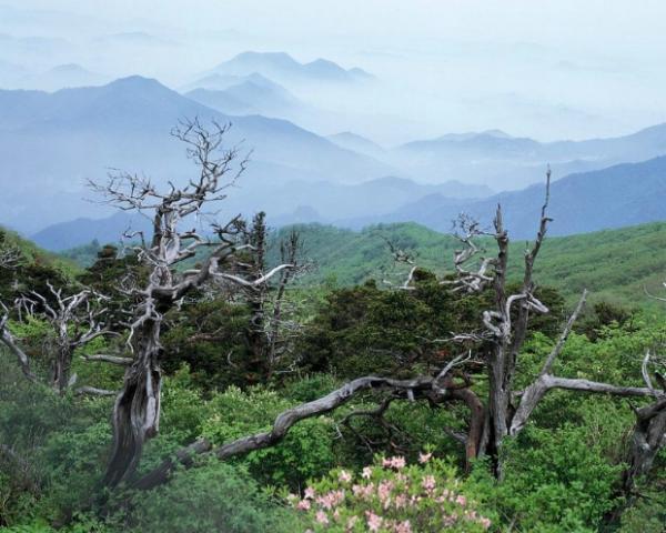丛林之美-自然风景,血战丛林,古木丛林的探险,丛林法则,丛林历险记-自然风景,丛林之美