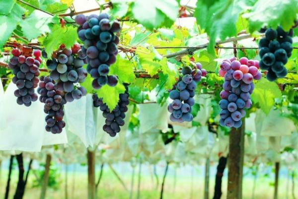 你认识这些水果吗 - bl7053 - bl7053 的博客