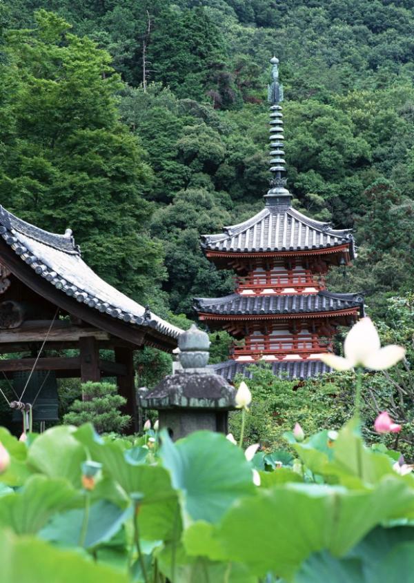 千年的传承,可怕的日本 - 柏村休闲居 - 柏村休闲居